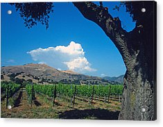 Santa Ynez Vineyard View Acrylic Print by Kathy Yates
