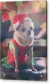Santa's Little Helper Acrylic Print by Laurie Search