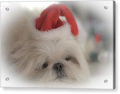 Santa's Sweetie Acrylic Print