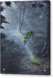 Sapling Acrylic Print by Adam Morris