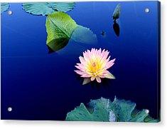 Sapphire Blue Acrylic Print