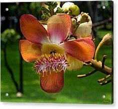 Sara Tree Flower Dthb104 Acrylic Print