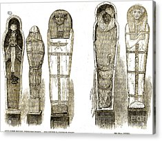 Sarcophagi And Egyptian Mummies Acrylic Print by Wellcome Images