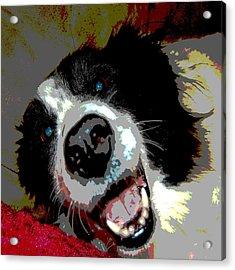 Sassy Acrylic Print by Audrey Venute