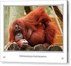 Sassy Orangutan Acrylic Print