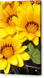 Acrylic Print featuring the photograph Satin Yellow Florals by E Faithe Lester
