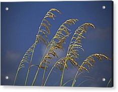 Acrylic Print featuring the photograph Saturday Sway by Michiale Schneider