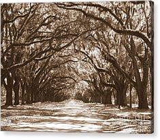 Savannah Sepia - Glorious Oaks Acrylic Print