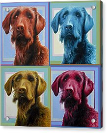 Savannah The Labradoodle Acrylic Print by Hans Droog