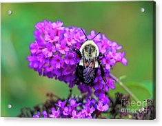 Save The Bees Acrylic Print by Elizabeth Dow