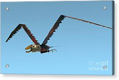 Acrylic Print featuring the photograph Saw Bird -raptor by Bill Thomson