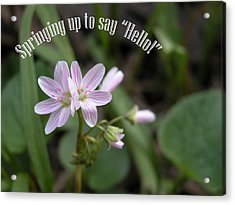 Say Hello Acrylic Print by Michelle Hastings