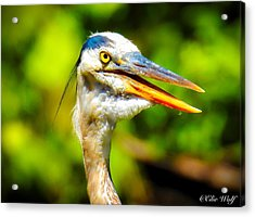Say What? Acrylic Print