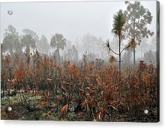 Scapes 2 13b Acrylic Print