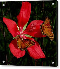 Scarlet Beauty Acrylic Print by Peg Urban