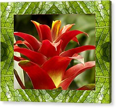 Acrylic Print featuring the photograph Scarlet Cheer by Bell And Todd