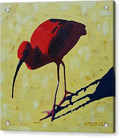Scarlet Ibis Acrylic Print by Donald Amorosa
