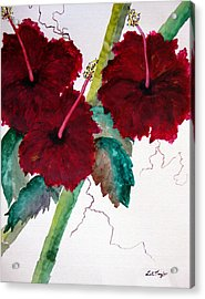 Scarlet Red Acrylic Print by Lil Taylor