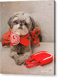 Scarlett And Red Purse Acrylic Print
