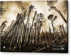 Scary Charcoal Forest  Acrylic Print