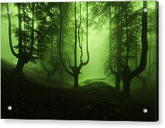 The Funeral Of Trees Acrylic Print