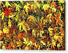Scattered Autumn Leaves Acrylic Print