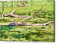 Scene With Old Dead Trees On Lake 2 Acrylic Print by Lanjee Chee
