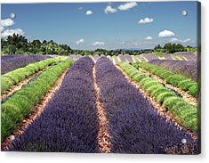 Scent Of Lavender Of Provence Acrylic Print by Any.colour.you.like Photography