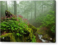 Scent Of Spring Acrylic Print by Evgeni Dinev