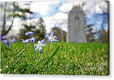 Acrylic Print featuring the photograph Scilla In Cemetery by Charline Xia