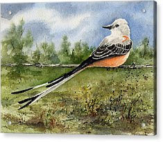 Scissor-tail Flycatcher Acrylic Print by Sam Sidders