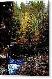 Scoggins Creek 3 Acrylic Print