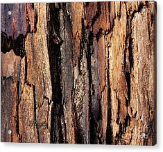 Scorched Timber Acrylic Print