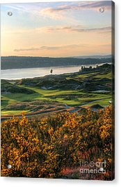 Scotch Broom -chambers Bay Golf Course Acrylic Print by Chris Anderson