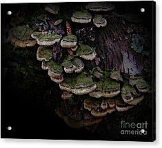 Scotopic Vision 1 - Pinecone Acrylic Print