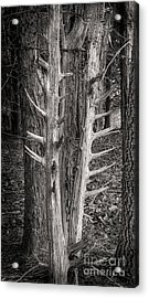 Scotopic Vision 4 - Trees Acrylic Print