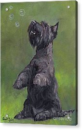Scottie Likes Bubbles Acrylic Print by Charlotte Yealey