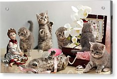 Scottish Fold Cats Acrylic Print by Evgeniy Lankin