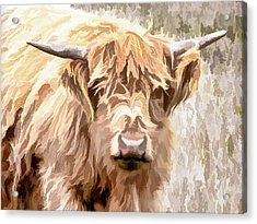 Scottish Highland Cow Acrylic Print