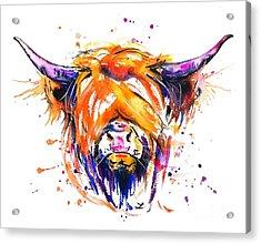 Scottish Highland Cow Acrylic Print