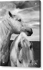 Scottish Horses Acrylic Print by Diane Diederich
