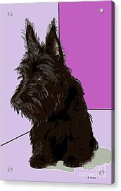 Scottish Terrier Acrylic Print by George Pedro