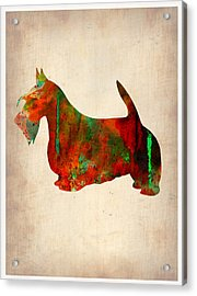 Scottish Terrier Watercolor 2 Acrylic Print by Naxart Studio