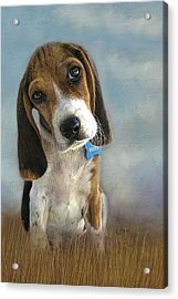 Acrylic Print featuring the photograph Scout by Steven Richardson