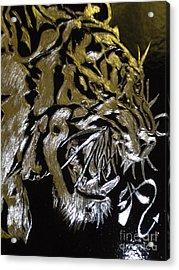 Screaming Tiger Acrylic Print
