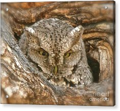 Screech Owl On Spring Creek Acrylic Print