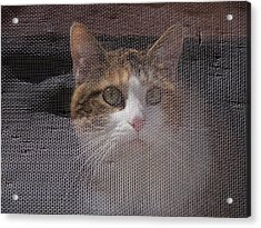 Screened Cat Acrylic Print