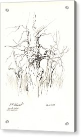 Acrylic Print featuring the drawing Scrub Oaks In Cottonwood by John Norman Stewart