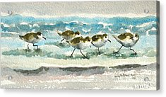 Scurrying Along The Shoreline 2  1-6-16 Acrylic Print