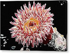 Sea Anemone  Acrylic Print
